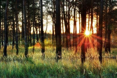 sunlight  forest stock photo colourbox