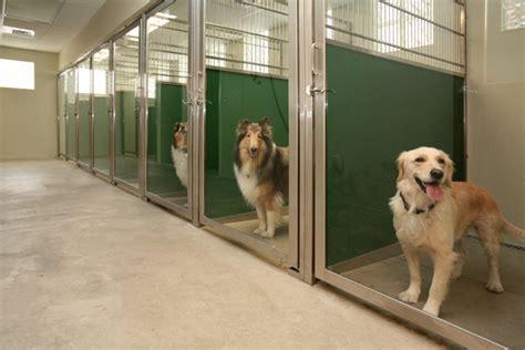 sturdy  panels   backbone  dog kennel designs