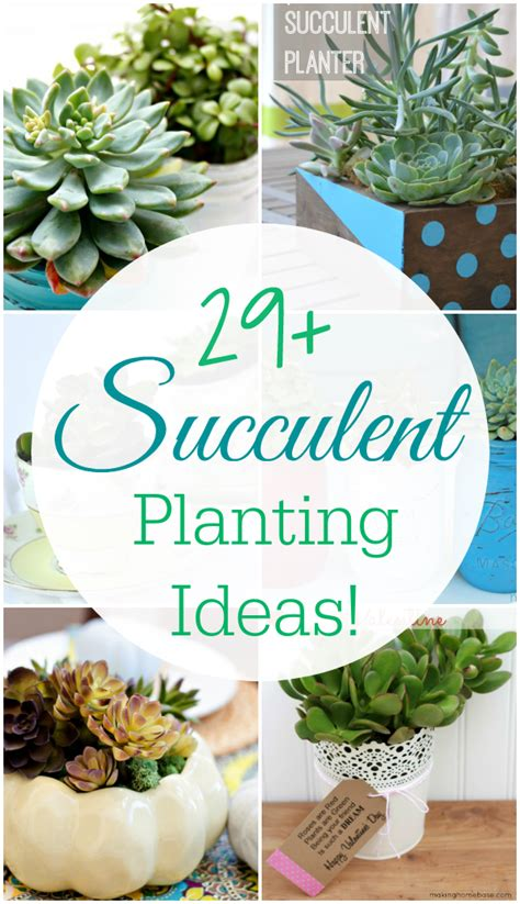 ideas for planting succulents 29 amazing succulent planting ideas mom 4 real