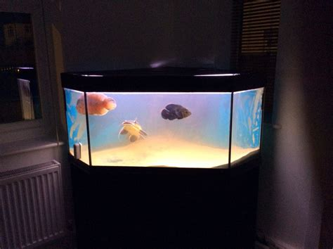 juwel 300 litre tropical aquarium and stand hatfield hertfordshire pets4homes