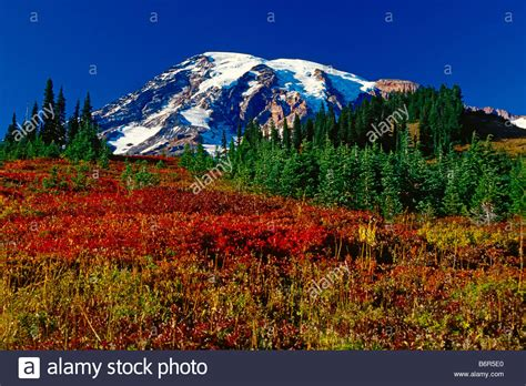 Paradise Meadow In The Fall In Mount Rainier National Park