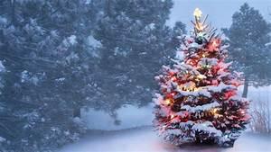 Nairn Christmas tree farm put on the market - BBC News