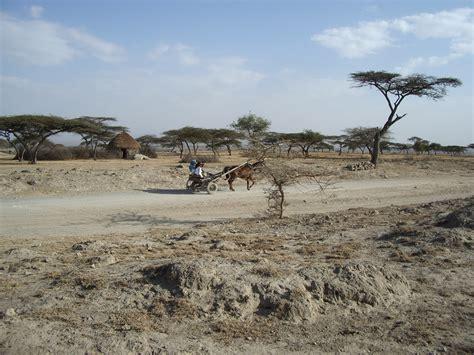 File:Ethiopia - Desert Donkey.jpg - Wikimedia Commons