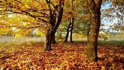 Wallpapers Autumn Listopad Nature Yellow Fall Desktop
