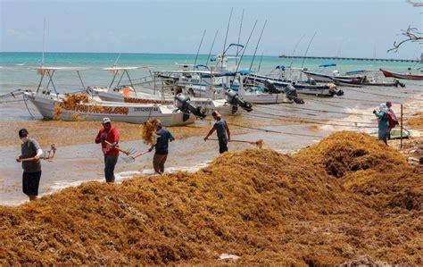 Otro caos en el Caribe: comienza a llegar a las costas el ...