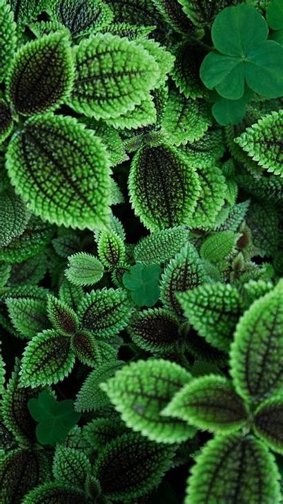 Leaves Qhd Wallpapers Nature 5k Iphone Desktop