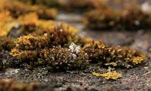 Moos Auf Dem Dach : moos und flechten auf dem dach foto bild pflanzen pilze flechten pilze flechten ~ Watch28wear.com Haus und Dekorationen