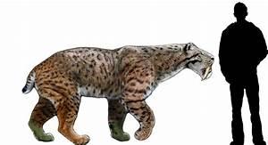 Uma Nobre Arte: Smilodon populator