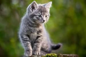 Katzen Fernhalten Von Möbeln : bilder von katzen affordable gerusche with bilder von ~ Michelbontemps.com Haus und Dekorationen