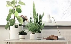 Piante Da Ufficio: Le piante grasse consigli coltivazione e cura