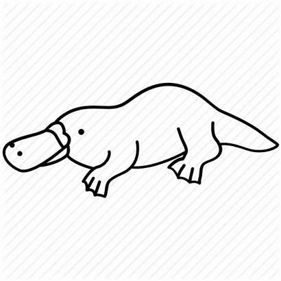 Clipart Platypus Outlines Transparent Australia Drawing Australian