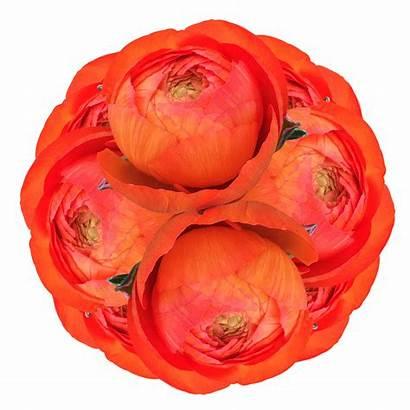 Ranunculus Orange Flowers Globalrose