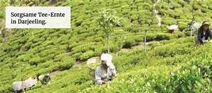 Wo Kann Man Als Neukunde Auf Rechnung Kaufen : guter bio fairtrade kaffee und fairtrade tee online kaufen kotopia tee kaufen bei ~ Themetempest.com Abrechnung
