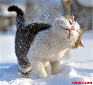 cat cold brrr this stuff is cold cats hq free pictures of