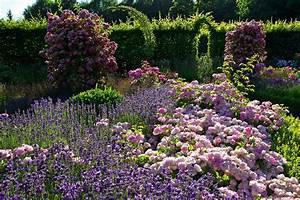 Rosen Und Lavendel : rosen und lavendel rosor lavendel lavendel rosor v xter ~ Yasmunasinghe.com Haus und Dekorationen