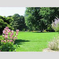 The Pines Garden