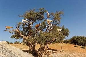 Arte Zu Tisch : zu tisch marokko arte magazin aboshop ~ A.2002-acura-tl-radio.info Haus und Dekorationen