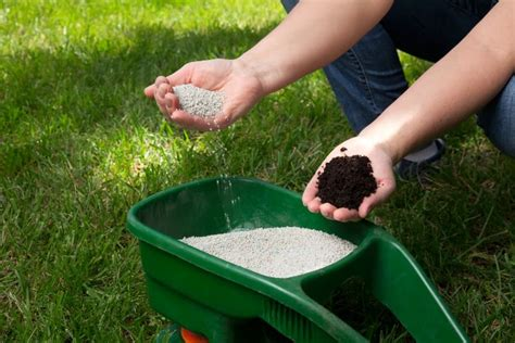 Yes, coffee grounds is okay as a fertilizer but better as a compost first before adding to the garden. Stop throwing out coffee grounds. Here are 10 reasons they'll change the way you plant