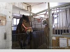 Behind the Scenes in the Clinton Park Horse Stables for
