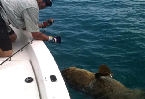 naples fishing grouper charters goliath offshore florida tales ground