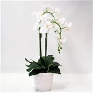 Orchideen Ohne Topf : seidenrosen orchideen g nstig kaufen ~ Eleganceandgraceweddings.com Haus und Dekorationen