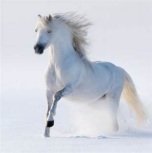 Au Cheval Blanc : papier peint cheval au galop blanc comme neige blanc ~ Markanthonyermac.com Haus und Dekorationen