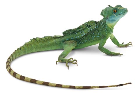 large water tank facts about lizards what is a lizard dk find out