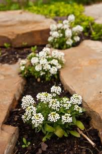flowering plants for and natives a rock garden