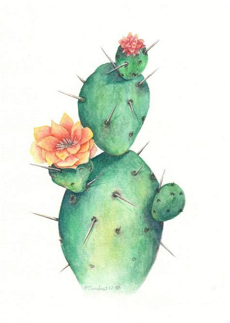 single cactus watercolor cactus painting watercolor cactus