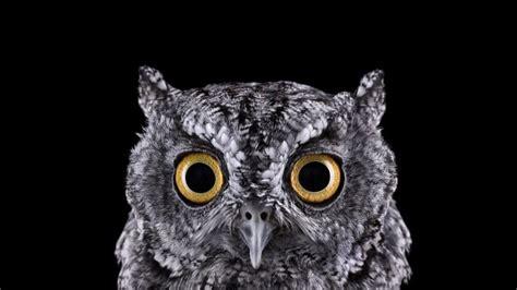 Creepy Owl Wallpapers by 3840x2160 Owl Creepy Predator Birds Wallpapers