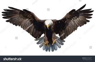 Bald Eagle Landing Drawing