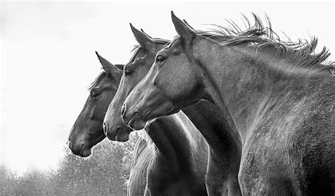 photographe equestre hippique reportage phototheque