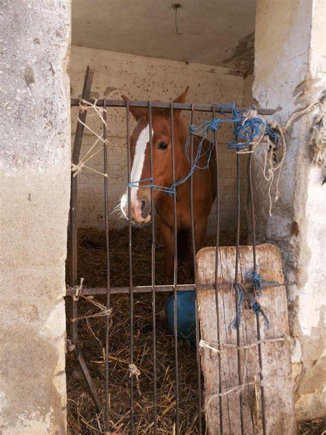 dati cavalli macellazione cavalli in italia i dati 2018 le