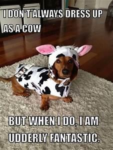 As 20 melhores ideias de Trocadilhos com vaca no Pinterest ...