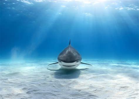 Tiburon, Fondos De Pantalla De Tiburones, Wallpapers Hd Gratis