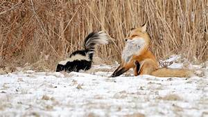 Funny Winter Animal Wallpaper 55 Images