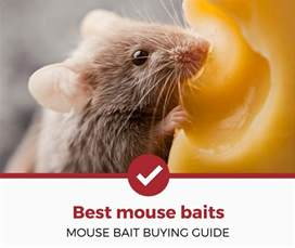 Best Mouse Poison Bait
