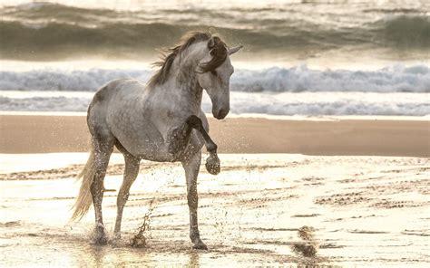 fonds decran promenade  cheval dans la plage