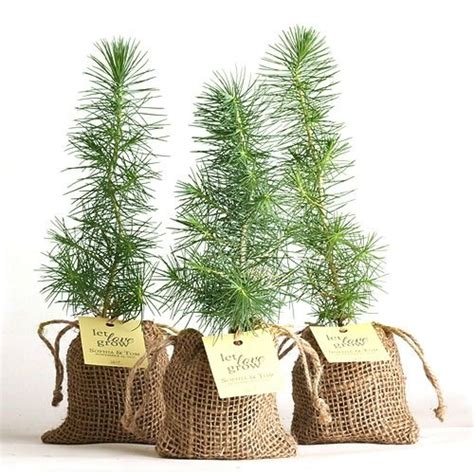 Pine Tree Plant Favor Burlap Pouch At