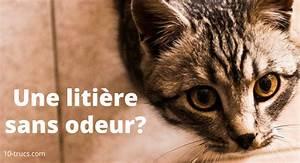 Litiere Chat Sans Odeur : odeur de liti re chat 10 trucs contre cette mauvaise odeur ~ Premium-room.com Idées de Décoration