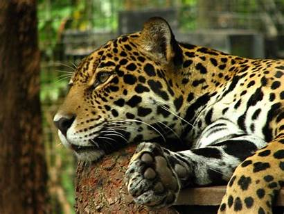 Florida Animal Lovers Places Zoo Fl Should