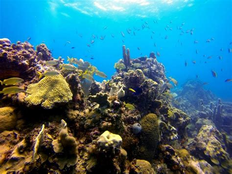 Dive Boats Catalina Island by Catalina Island Dive Dominican Republic Gopro Hd Youtube