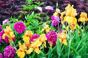 Rosen Und Stauden Kombinieren : pfingstrose diese begleitpflanzen vertragen sich gut mit ihr ~ Orissabook.com Haus und Dekorationen