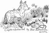 Coyote Trapper Template Coloring sketch template