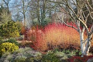 Les Plus Beaux Arbres Pour Le Jardin : 5 id es pour un jardin beau et color en hiver ~ Premium-room.com Idées de Décoration
