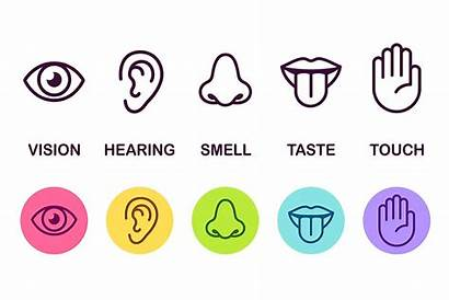 Senses Five