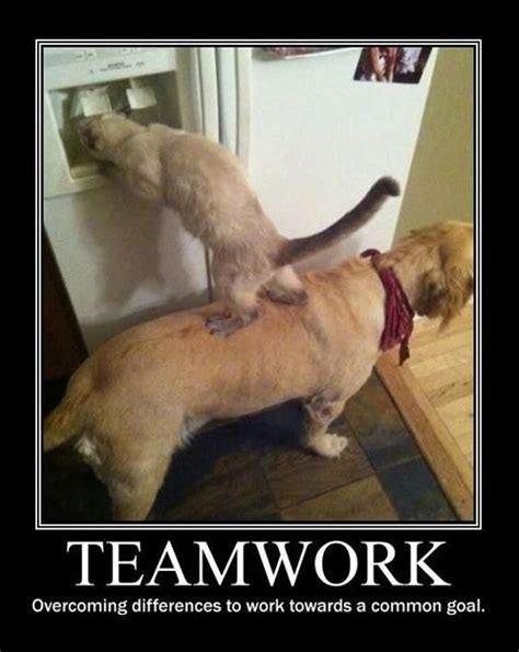 Teamwork Meme - monday teamwork quotes quotesgram