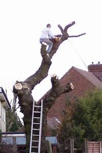 Arboricultural Association Choose Your Tree Surgeon