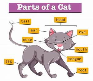 Diagram Showing Parts Of Cat Stock Vector