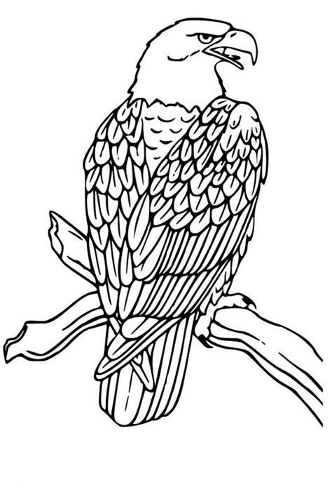 bald eagle drawing coloring page netart